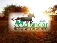 Haras Marancar