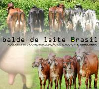 Balde de Leite Brasil