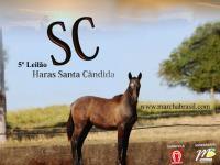 5º Leilão Haras Santa Candida
