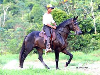 Cervantes Diadorim